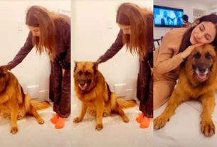 Shehnaaz Gill playing with pet dog Tyson